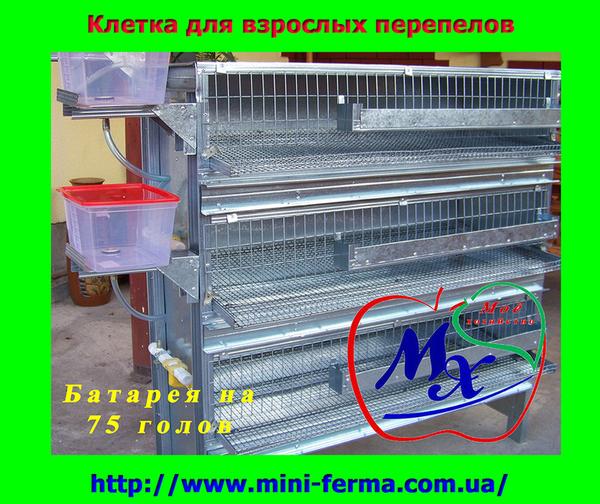 Оборудование для содержания перепелов  (клетки).  2