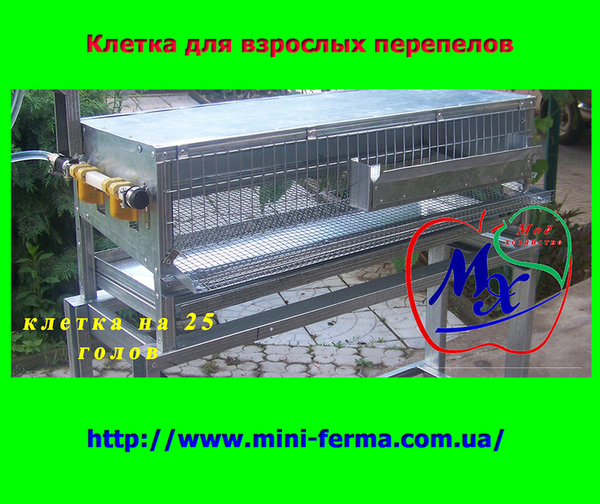Оборудование для содержания перепелов  (клетки).  3